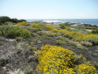 Rana Creek: The Design Firm Bringing Architecture to Life - Photo 7 of 11 - Pacific Grove Dune Restoration by John Wandke.