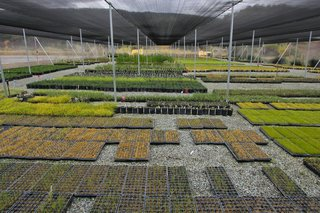 Rana Creek: The Design Firm Bringing Architecture to Life - Photo 9 of 11 - Rana Creek Nursery by David Bryan.