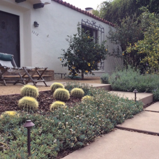 Photo of the Week: Drought-Tolerant Garden - Photo 1 of 4 - @stevesiegrist: Drought tolerant garden in Santa Monica that we completed about 18 months ago. Growing in nicely.