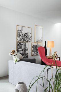25 Dogs Living in the Modern World - Photo 18 of 25 - Ibbel, a Parson Russell terrier, and his tennis ball survey the living room from the back of a Cuba sofa by Rodolfo Dordoni for Cappellini. The framed drawings are by Poorter and Holdrinet.