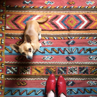 Photo of the Week: Beautifully Textured Moroccan Rug and a Puppy - Photo 1 of 1 -