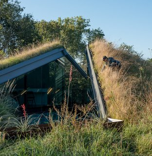 The green roof and yard at the Edgeland House is a mix of around a hundred different native grasses and plants.