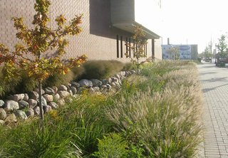 Chicago's Green Mile - Photo 1 of 2 - The Pilsen Sustainable Streetscape program revitalized sections of Cermak Road and Blue Island Avenue in Chicago, Illinois. Bioswales—landscape elements that provide environmentally firendly alternatives to storm sewers—line portions of the industial thoroughfares.
