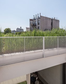 A Rooftop Garden Completes This Urban Pastoral Home - Photo 2 of 11 - Vegetation from the garden on the lower roof provides a contrast to the backdrop of Gowanus's rapidly changing landscape.