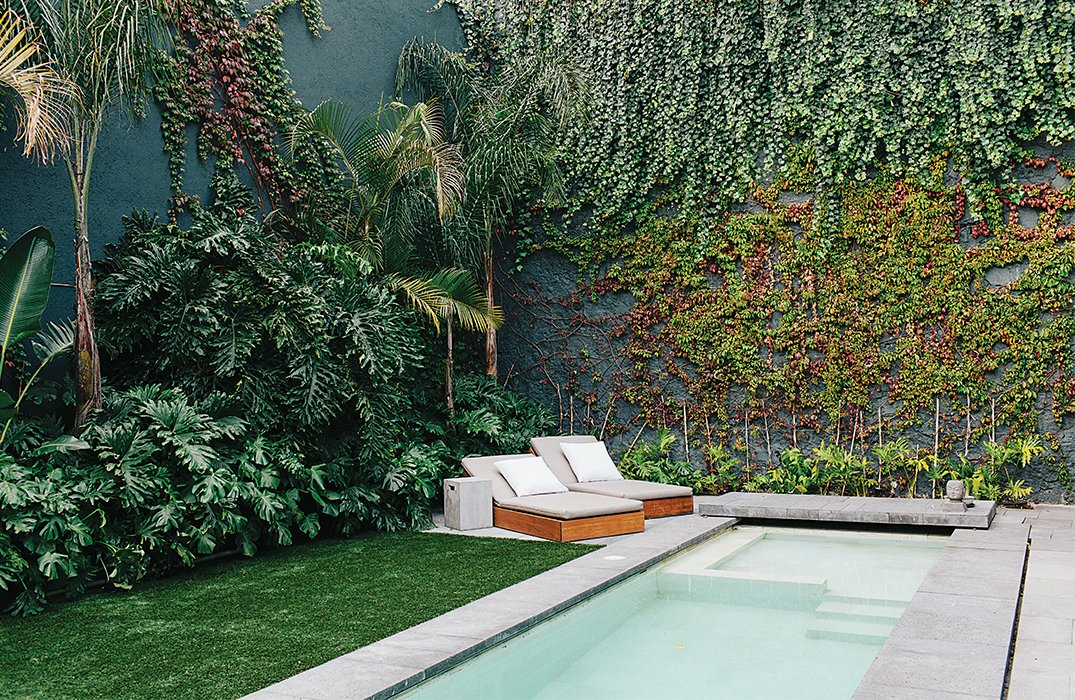 The rooftop courtyard is lined with a verdant mix of indigenous plants, including banana trees, palm trees, lion's claw, Mexican breadfruit, and native vines. The chaise longues were designed for Farca's EF Collection. Tagged: Outdoor, Small Pools, Tubs, Shower, Grass, Trees, Gardens, and Back Yard.  Photo 7 of 15 in A Lush Retreat With a Sheltered Rooftop Pool in Mexico City