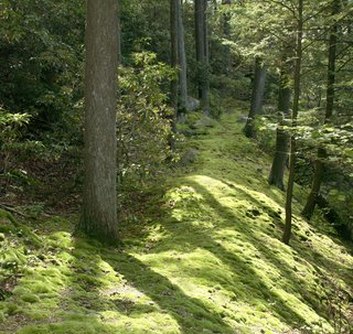 Meticulously transplanted and cultivated moss pathways crisscross the property. Visitors are frequently astonished to learn the paths were not the landscape's natural state.