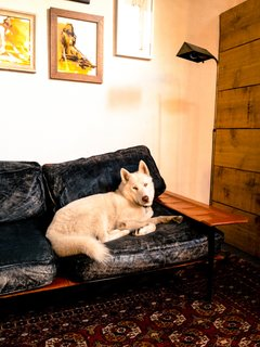 Mathew Gerson's husky is an unofficial member of the Number Five co-working collective in Venice. Photo by Marc Alt