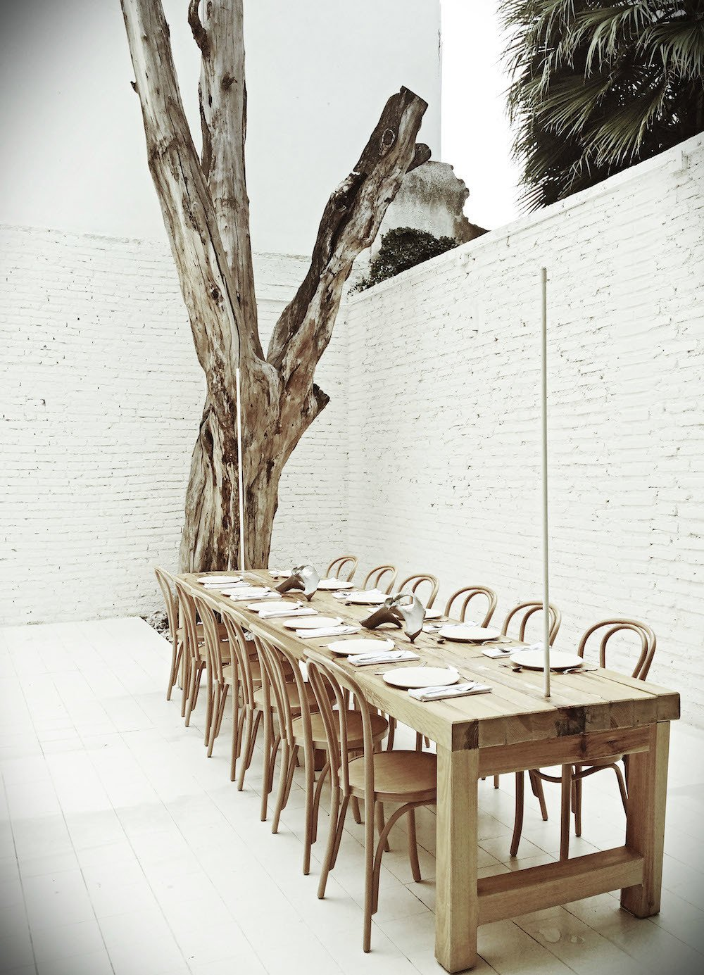 One of the private dining rooms at Hueso includes a dead tree that Cadena says sat in front of the building for six years. Initially, he was going to design a suite of custom chairs for the restaurant, each one with individual features, but he settled on classic Thonet chairs instead.  Photo 8 of 9 in 10,000 Bones Cover the Walls of this Mexico Restaurant