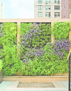 Nelson Byrd Woltz Harnesses the Natural Elements - Photo 3 of 5 - The perennial plants on the green wall were plotted out as a piece of verdant abstract art. Edibles, like strawberry, thyme, and rosemary, are planted within children's reach.