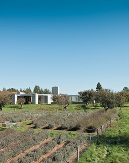 A Sonoma Prefab That Celebrates a Family's Passion for Cooking - Photo 1 of 17 - The Hupert-Kinmont house lies low in a century-old apple orchard, far from neighboring houses. The spaciousness of the rural surroundings is echoed inside.