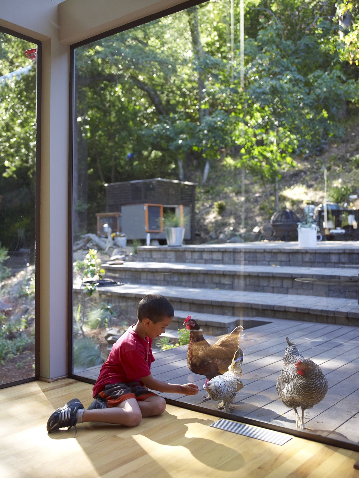 Chicken under glass? Apolo will settle for eggs for breakfast.