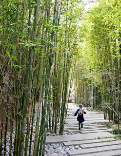 This Endless Playscape Is Complete with a Bamboo Forest and Trampoline - Photo 2 of 10 - The property is divided into zones, including a shade garden with a meandering path of staggered concrete pavers flanked by bamboo. As this area is sloped, the designers created a swale effect with permeable river rocks on one side.