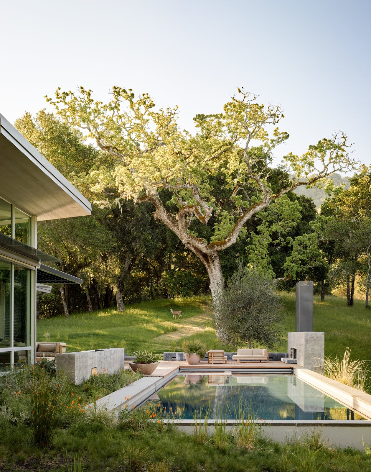 Wildlife are frequent visitors here, but the area's active woodpeckers aren't very welcome, so the house is clad in corrugated metal siding by Recla Metals. Tagged: Outdoor, Back Yard, Front Yard, Side Yard, Swimming Pools, Tubs, Shower, Trees, and Grass.  Modern Pool Design by Dwell from A Meadow With Amenities
