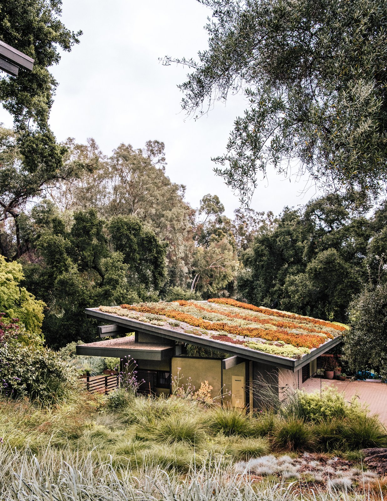 The sloped roof of Carlton's art studio grows a colorful mix of sedum species.  Photo 13 of 14 in Creative Revival of a Modernist Gem