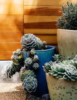 Easy-to-maintain Mexican Feather Grass and succulents have reduced the yard's water consumption.