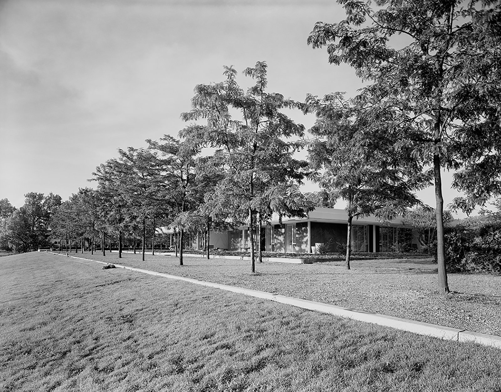 Dan Kiley famously planted two rows of honey locusts at the Miller House in Columbus, Indiana. The arbor flanks the western side of the Eero Saarinen–designed home, echoing  its geometric lines.