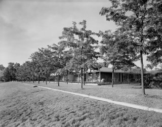 Dan Kiley famously planted two rows of honey locusts at the Miller House in Columbus, Indiana. The arbor flanks the western side of the Eero Saarinen–designed home, echoing <br>its geometric lines.