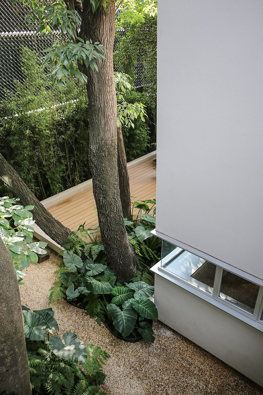 Filters purify rainwater that drains from the roof or through the wood-plastic composite deck.  A cistern collects the water for indoor use. Tagged: Outdoor, Trees, Small Patio, Porch, Deck, and Wood Patio, Porch, Deck.  Photo 3 of 13 in Retired Couple Build Modern in Mexico City