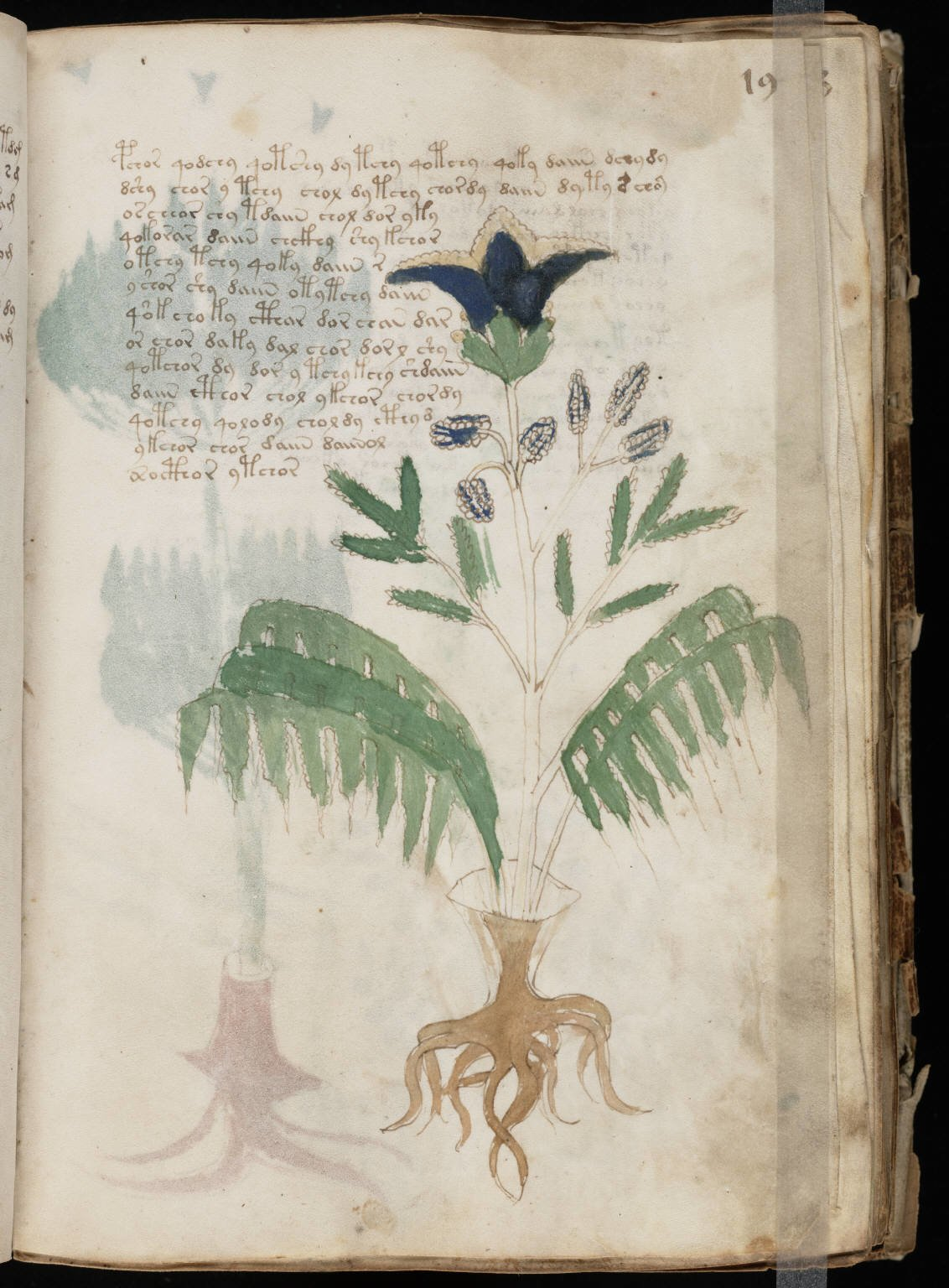 The voynich manuscript - palatino press.