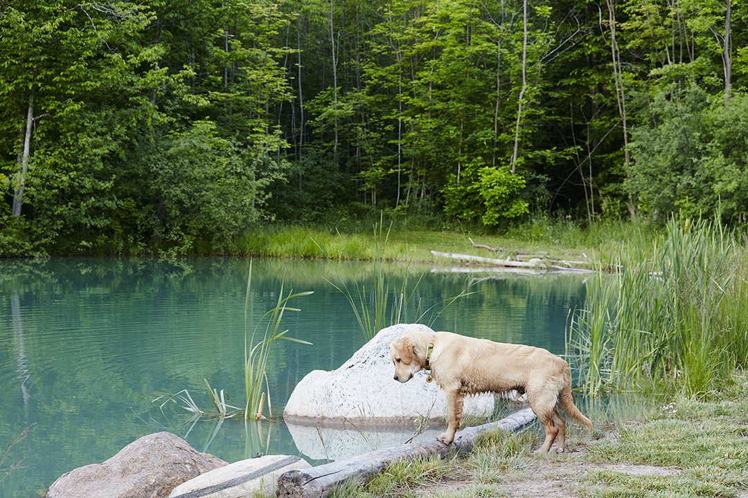 The 10-acre property offers ample terrain for the family and pets to explore. Otis examines the pond, which was deepened to 20 feet and stocked with trout.  The Land House by Dwell from Hot to Trot