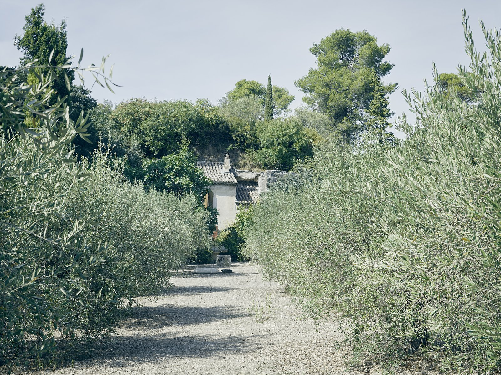 An olive grove frames Lolo's farmhouse. Tagged: Outdoor.  Photo 5 of 19 in Mine Dining