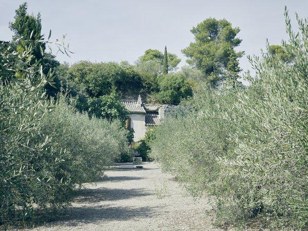 An olive grove frames Lolo's farmhouse. Photo 5 of Mas de la Pyramide modern home
