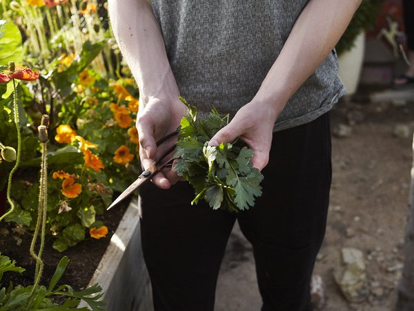 The vegetable garden produces everything from cauliflower to arugula and Italian parsley.