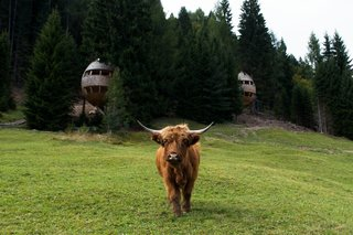These Tree Houses in the Dolomites Look Like Egg-Shaped Pinecones - Photo 2 of 11 -
