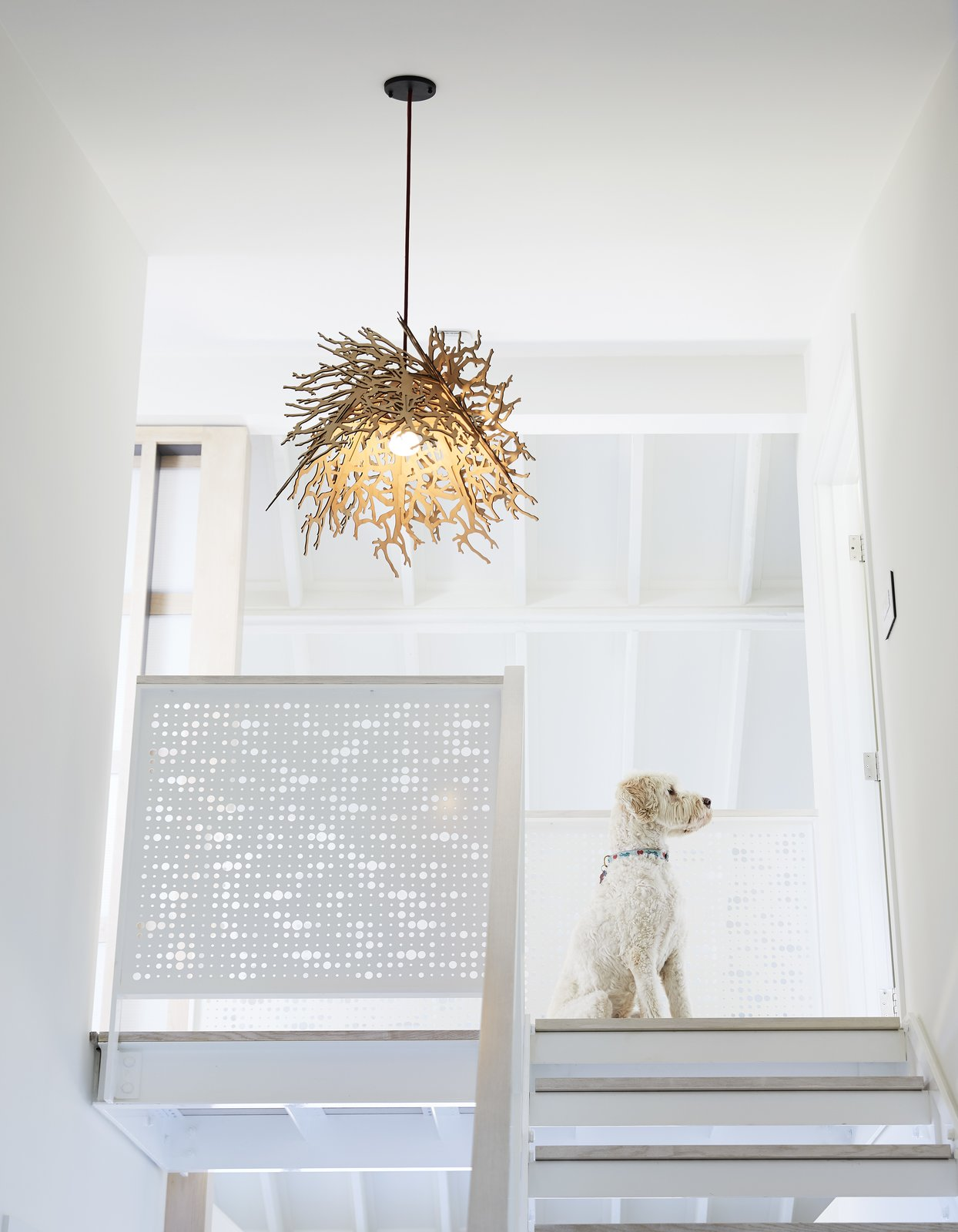 Teddy, an Australian Labradoodle, sits at the landing of the sleeping loft (left), which is located above the master suite. - Rockport, Massachusetts Dwell Magazine : November / December 2017 Tagged: Staircase and Metal Railing.  Best Photos from On the Coast of Massachusetts, a Prefab Ranch Is Totally Overhauled for a Wheelchair-User