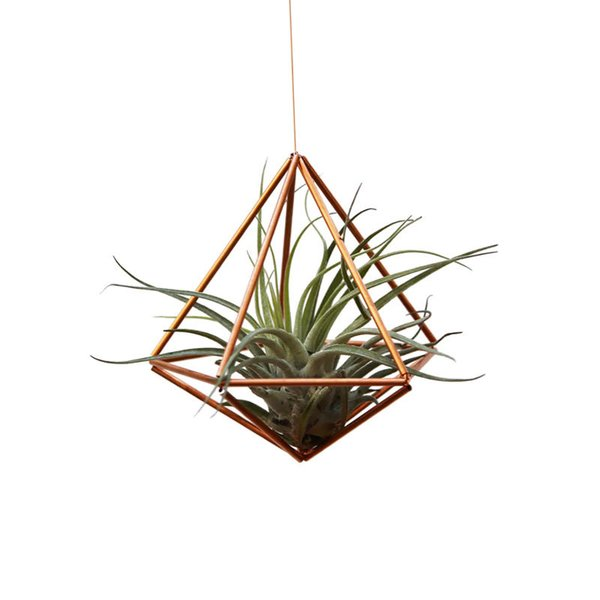 RoCo DIY Air Plant Kit