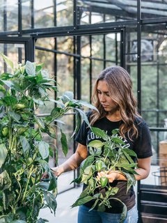 A Black Stucco Home in Dallas Is Surrounded by Eye-Popping Greenery - Photo 3 of 17 - A neighbor harvests bell peppers in the garden. Behind her is the greenhouse, where Lynn starts vegetables like lettuce, Swiss chard, and tomatoes.