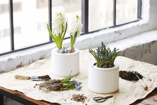 Clueless About Gardening? These 5 Smart Planters Can Help - Photo 5 of 9 -