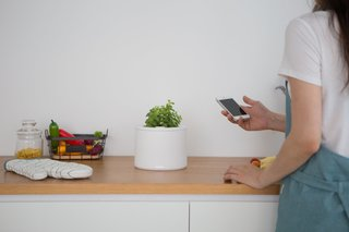 Clueless About Gardening? These 5 Smart Planters Can Help - Photo 6 of 9 -
