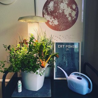 Clueless About Gardening? These 5 Smart Planters Can Help - Photo 7 of 9 -