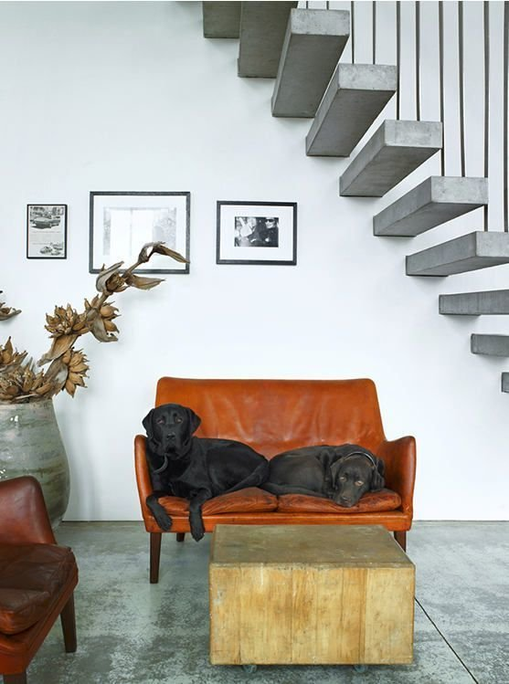 #labs #chocolatelabs #stairs #choppingblock  Dogs Who Love Modern Design by Brian Karo from Pets