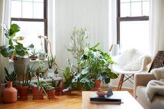 500 Square Feet Is Just Right in Greenpoint - Photo 2 of 6 - Many of the plants in the apartment were purchased at Sprout Home and Crest Hardware in Brooklyn. Cecilia, who is also a ceramic artist, made some of the planters, while others are picks from some of her favorite ceramicists.