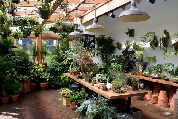 In the sun room, Pistils offers to pot any plant you purchase from them. In the back garden area, you can pick out the perfect plant and meet the chickens that hang out around the on-site chicken coop.