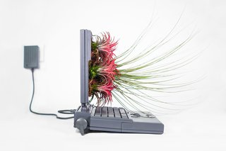 Plant Your Mac! By Monsieur Plant - Photo 5 of 7 -