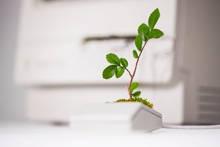 Plant Your Mac! By Monsieur Plant - Photo 1 of 7 -