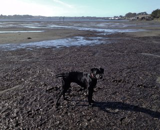 Curly's Cove:  One Man's Trash... - Photo 9 of 9 - Curly in her cove (at low tide, her favorite!)