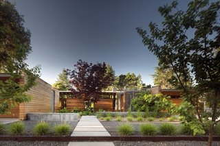 "Channeling Midcentury Modern in Northern California - Photo 6 of 7 - A mature Japanese maple was preserved during construction. ""The way we designed the entry sequence, with the front door not facing the street, but rather facing the Japanese maple tree, relates to Christopher Alexander's concept of 'entrance transition,'"" says Mottola."