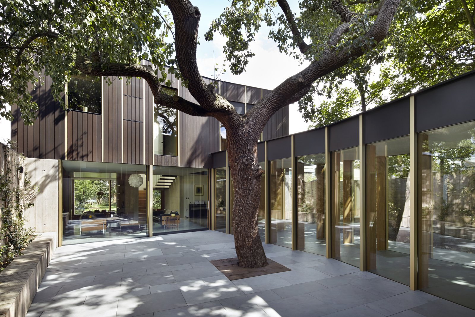 Photo 1 of 9 in This Modern Courtyard Home Celebrates a 100-Year-Old Tree