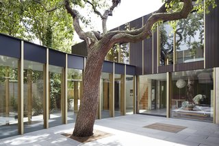 "This Modern Courtyard Home Celebrates a 100-Year-Old Tree - Photo 1 of 8 - ""I believe that the beauty is in the execution. Beautiful things can be made from humble materials with thought and care,"" says architect Jake Edgley."