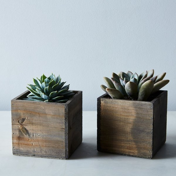 DIY Succulent and Wood Planter (Set of 2)