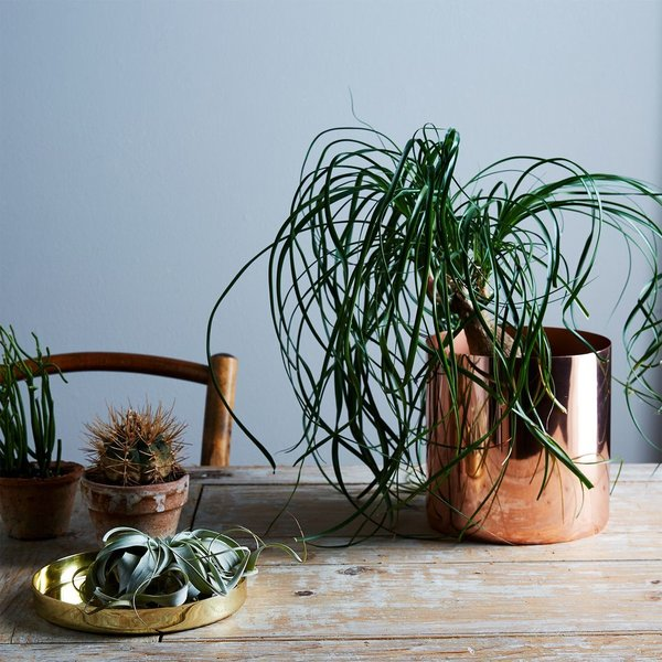 Copper and Brass Louise Planters