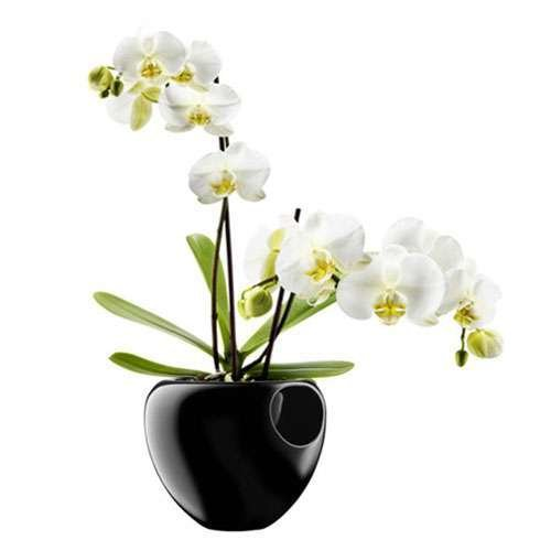Orchid Pot from Eva Solo