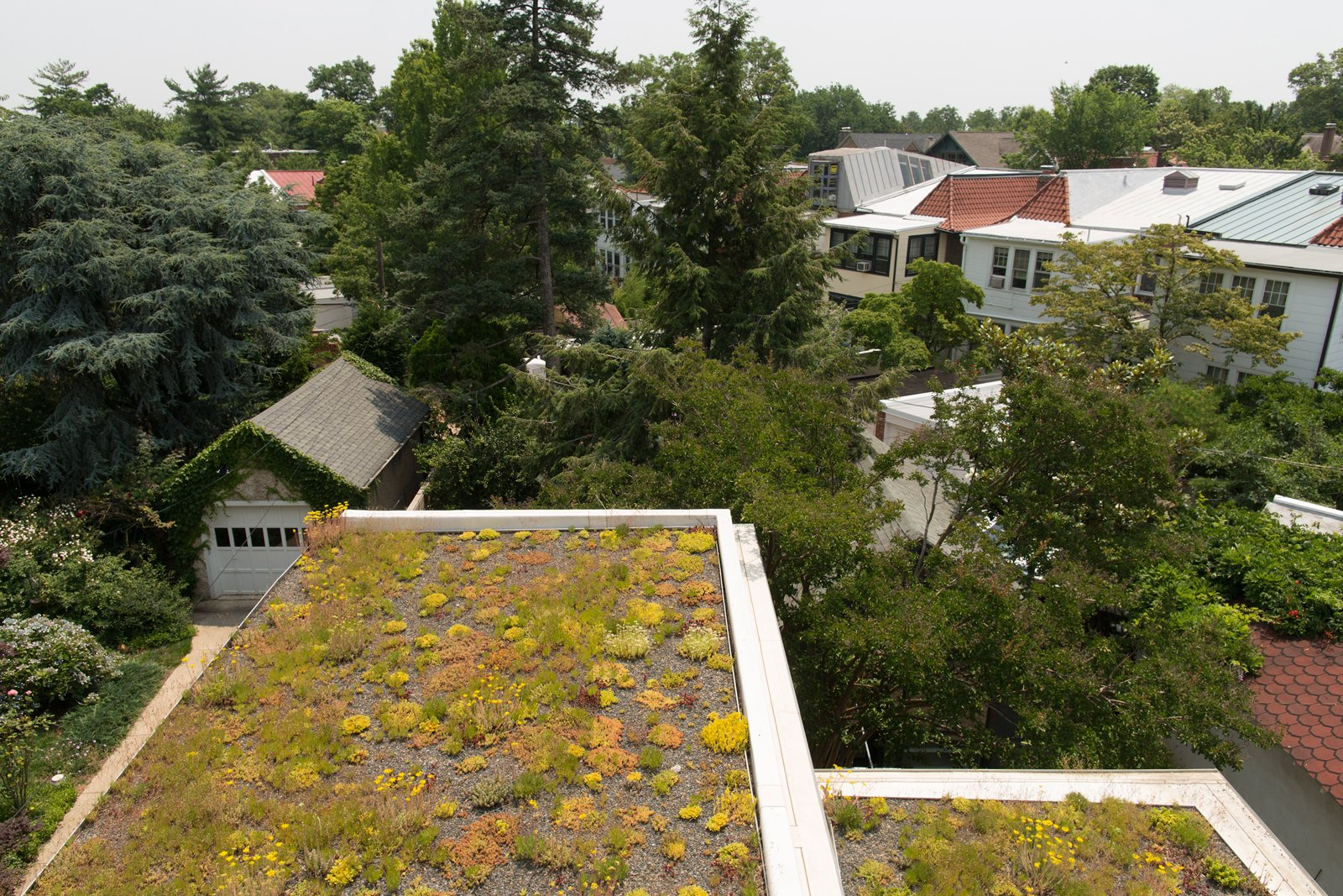 For the green roof, the family received a subsidy administered by DC Greenworks and funded by the DC Department of the Environment. The sedum plantings come from nearby Emory Knoll Farms, the only nursery in North America to focus solely on propagating plants intended for green-roof systems.  The sedum plantings come from nearby Emory Knoll Farms, the only nursery in North America to focus solely on propagating plants intended for green-roof systems. Tagged: Exterior, House, and Green Roof Material.  Photo 9 of 12 in These 10 Green Roofs Bring Life—and So Much More—to These Modern Structures