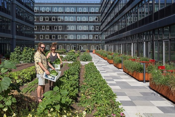 """3 New York City Residential Projects That Feature DIY Urban Gardens - Photo 6 of 7 - Residents will be able to harvest their own crops under the direction of a """"farmer-in-residence."""""""