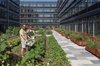 "3 New York City Residential Projects That Feature DIY Urban Gardens - Photo 6 of 7 - Residents will be able to harvest their own crops under the direction of a ""farmer-in-residence."""