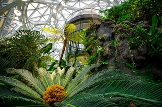 Meet Downtown Seattle's Newest Landmark: The Amazon Spheres - Photo 7 of 8 - Exposure to nature is proven to put people at ease and help them think more creatively, so the Spheres are designed to help Amazon employees feel and work their best.